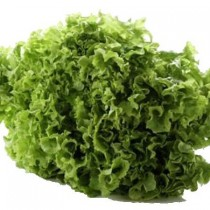 Lolorosso Yeşil